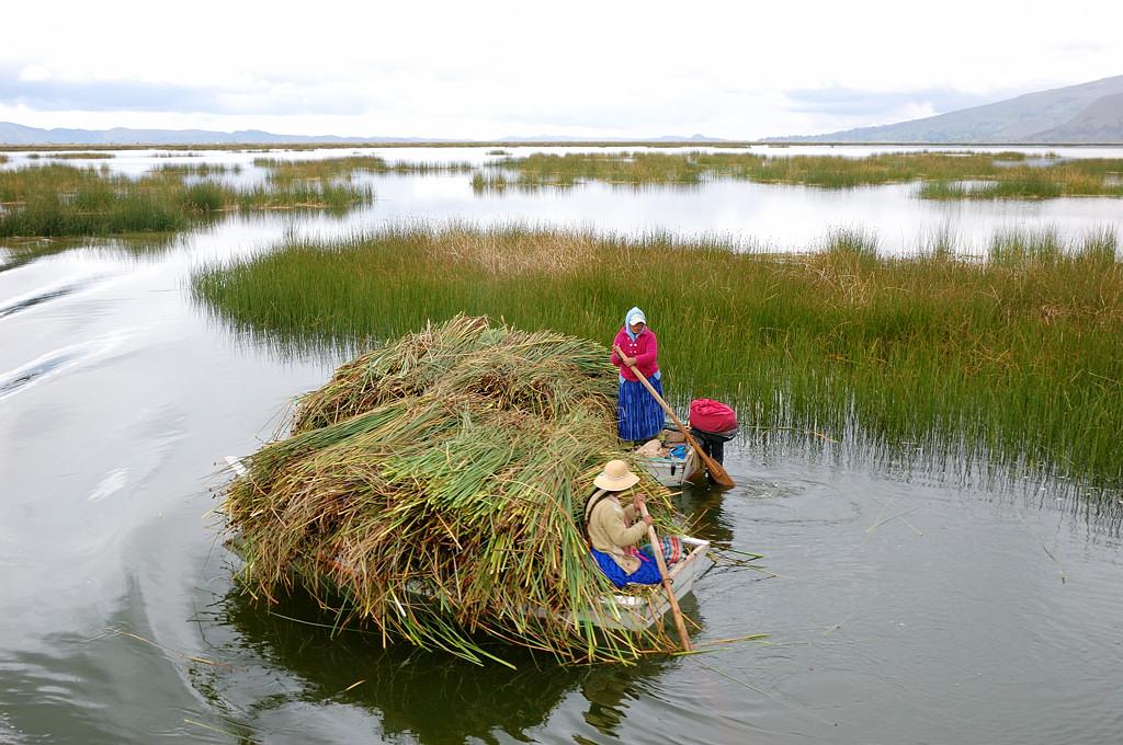 Заготовка тростника для новых островов