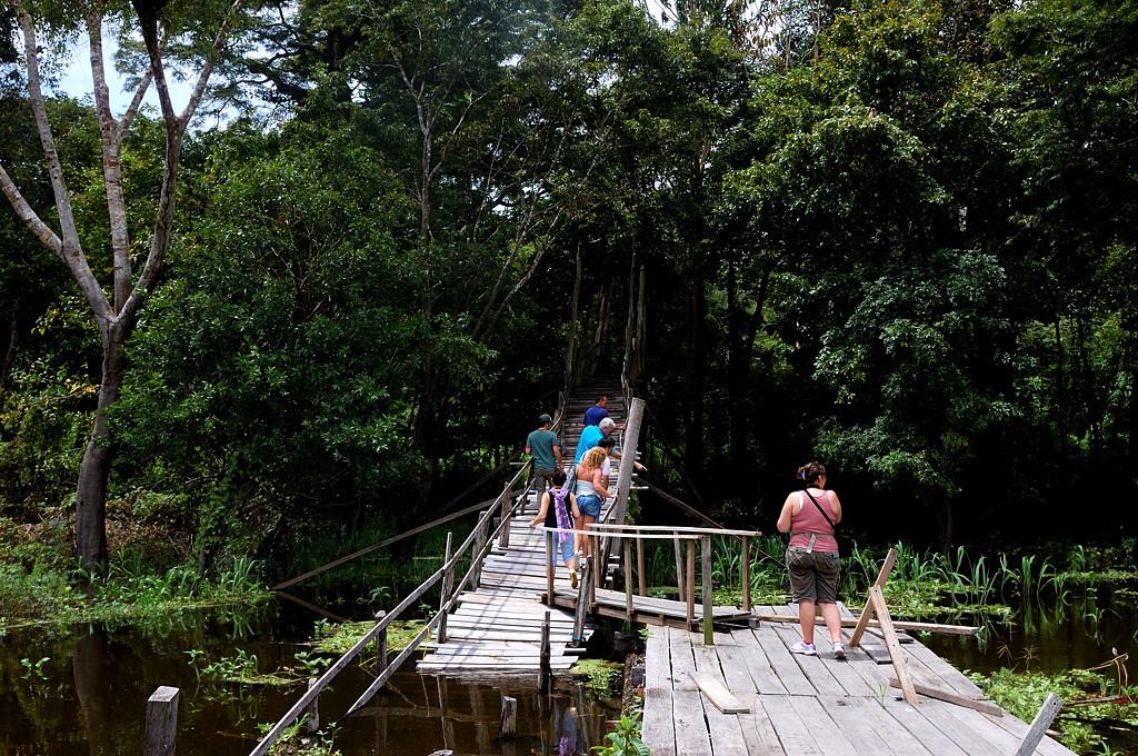 Идем на прогулку по джунглям