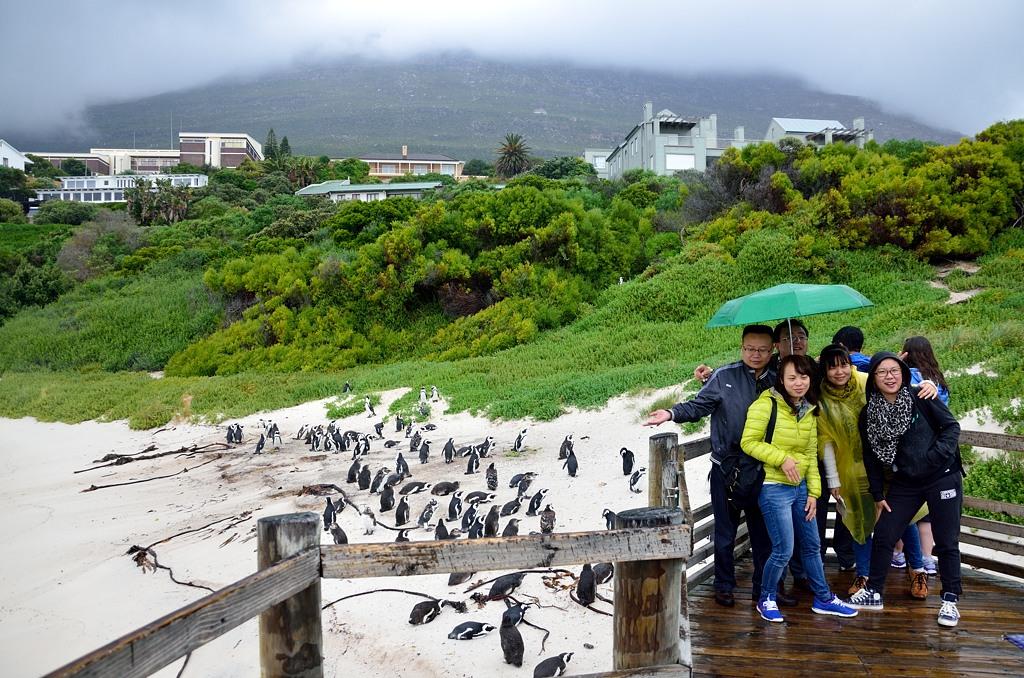 Туристы фотографируются с пингвинами