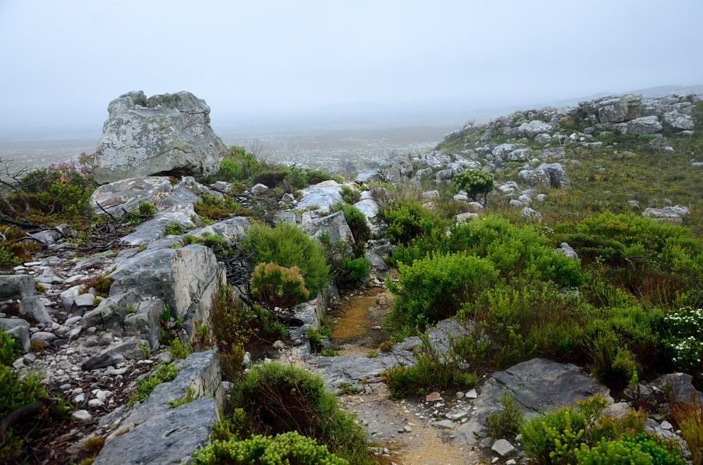 Мыс Доброй Надежды окружает национальный парк, выглядящий вот примерно так