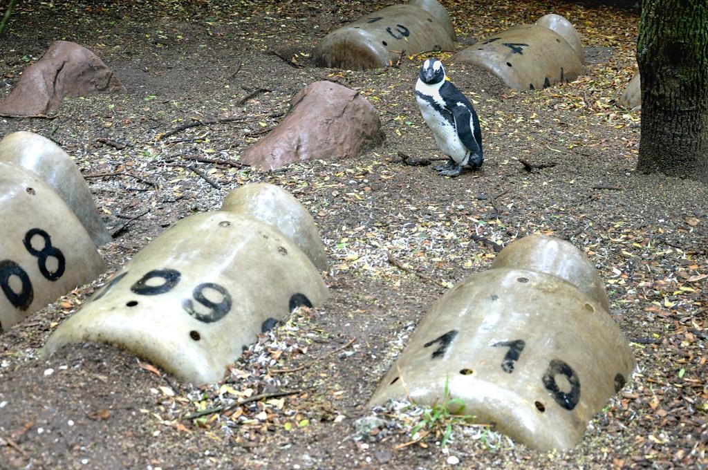 Домики для пингвинов. Ми-ми-ми :)