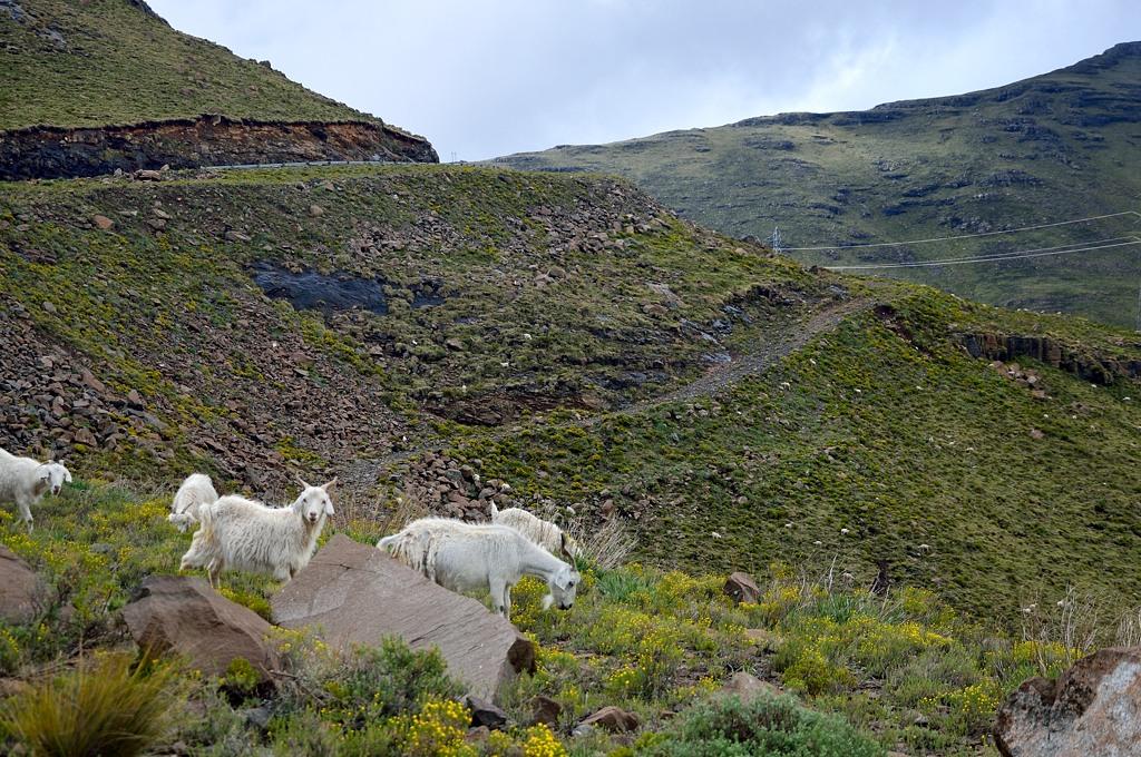 В горах пасутся козы