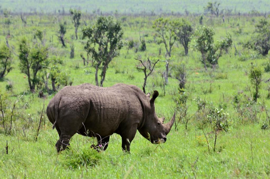 Носороги как будто с другой планеты, такие необычные