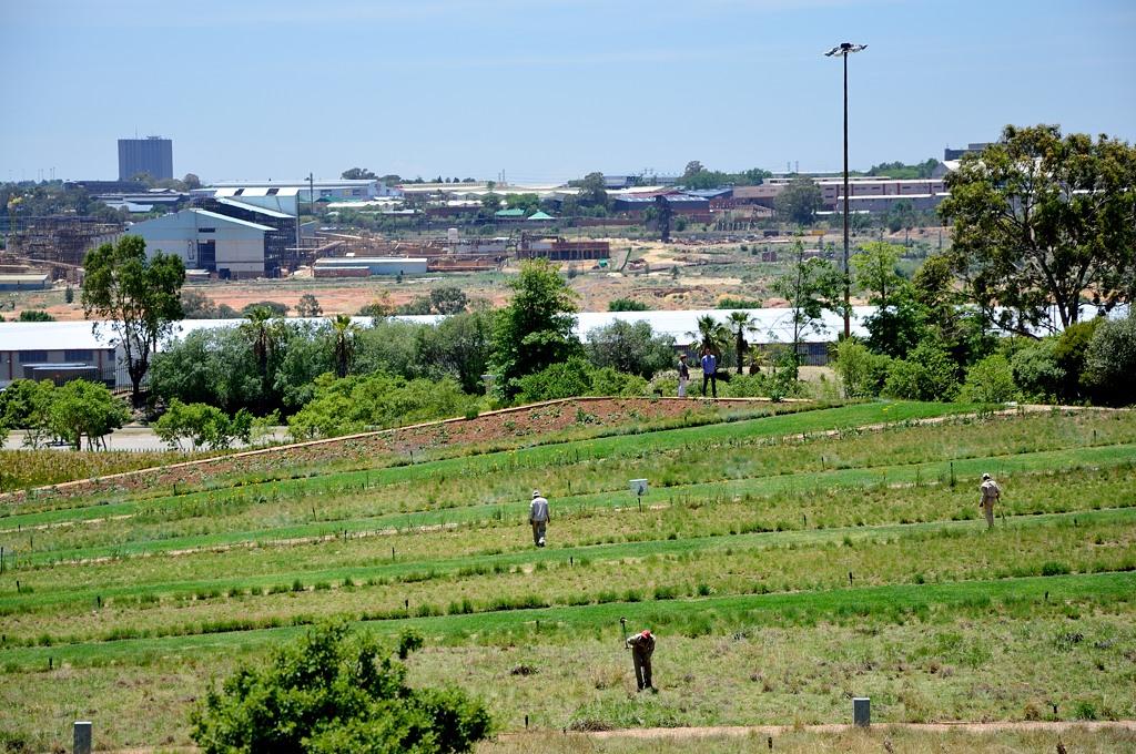 Апартеид отменили, а черные продолжают гнуть спины на полях. Прямо рядом с музеем