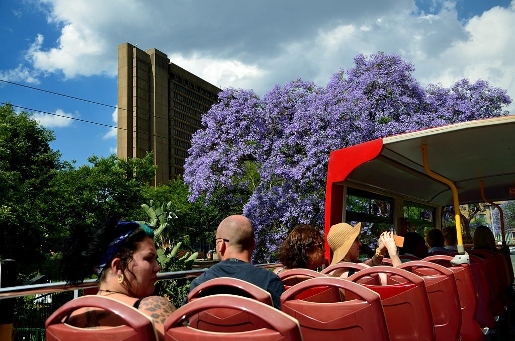 На улицах цветет жакаранда