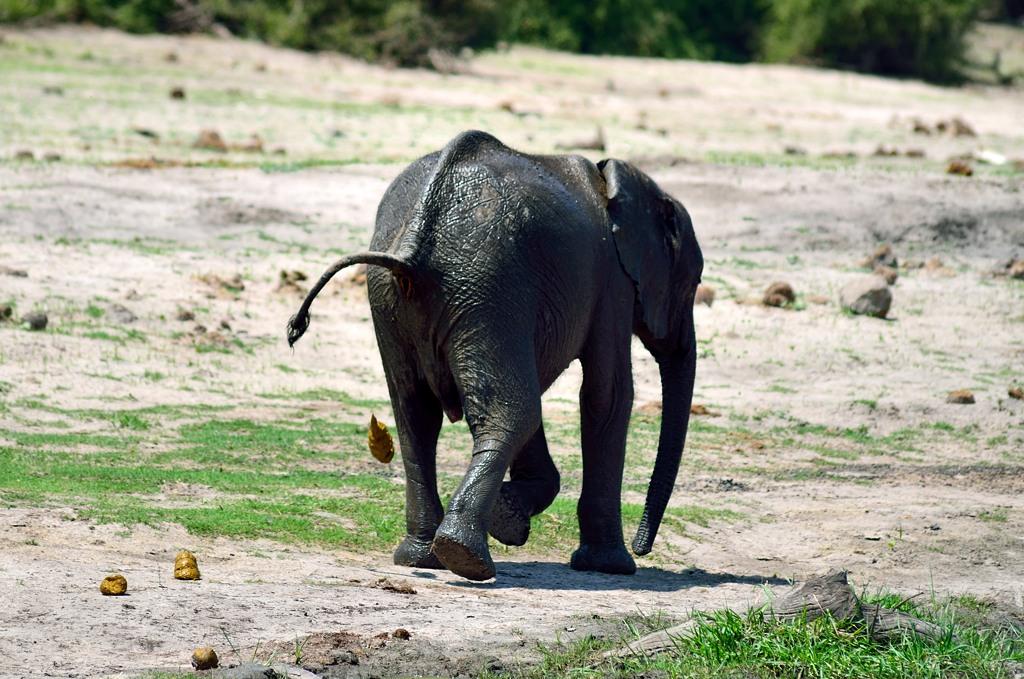 Какающий слоненок :)