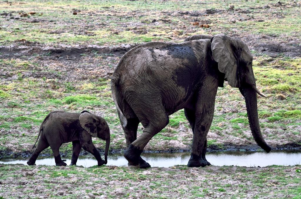 Слон со слоненком. Ми-ми-ми :)