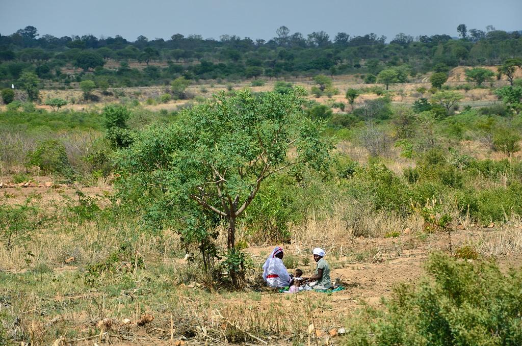 Пикничок по-зимбабвийски