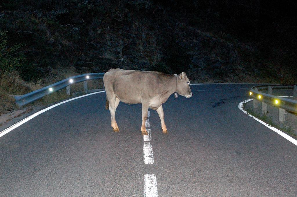 Север Каталонии. Ночью на перевале на дорогу выходили животные