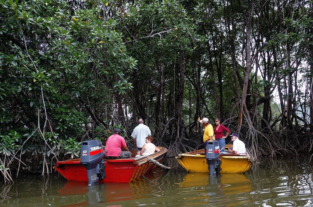 Туристам показывают обезьян в джунглях