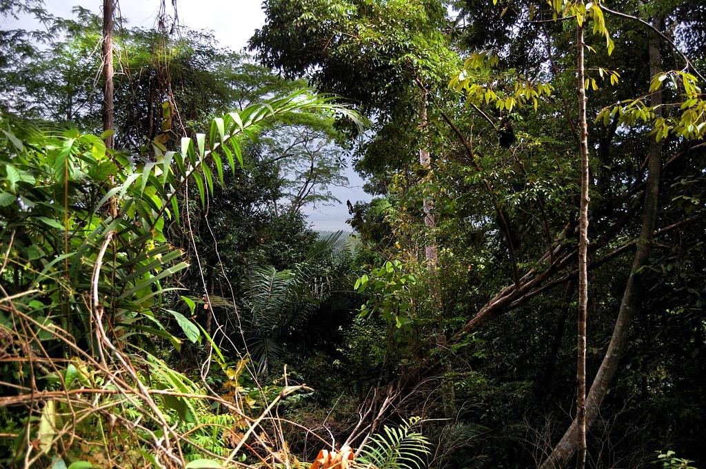 В джунглях на горе