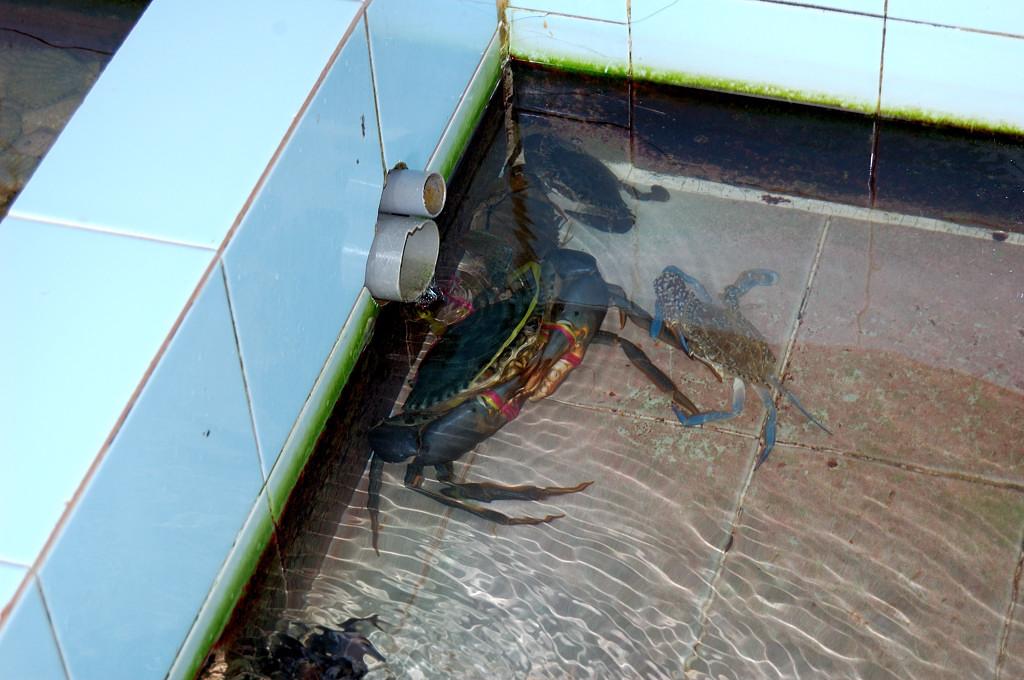 В ванночках плавали морепродукты