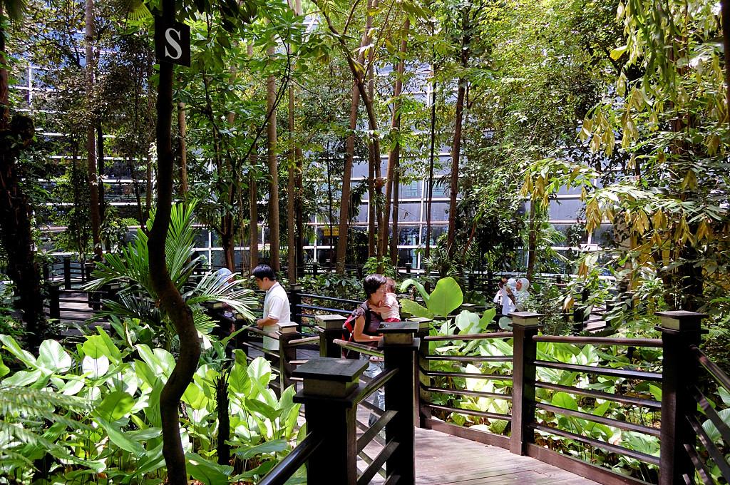 Кусок джунглей в центре аэропорта KLIA