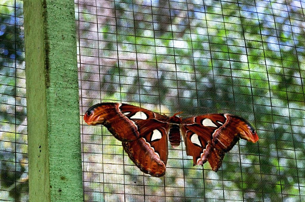 В парке бабочек