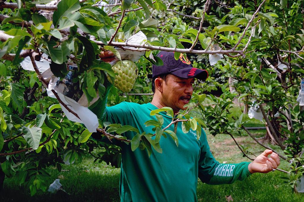 На ферме тропических фруктов. Наш экскурсовод. Что за фрукт он демонстрирует - я уже забыл.