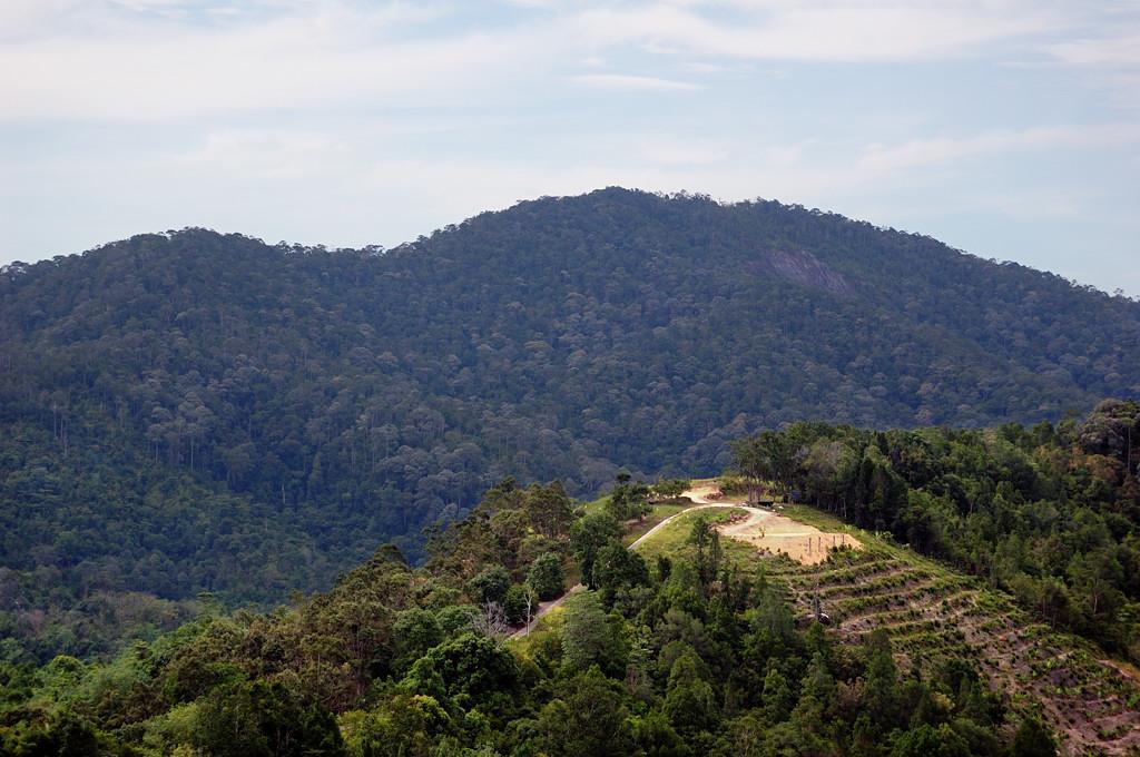 В горах на ферме тропических фруктов