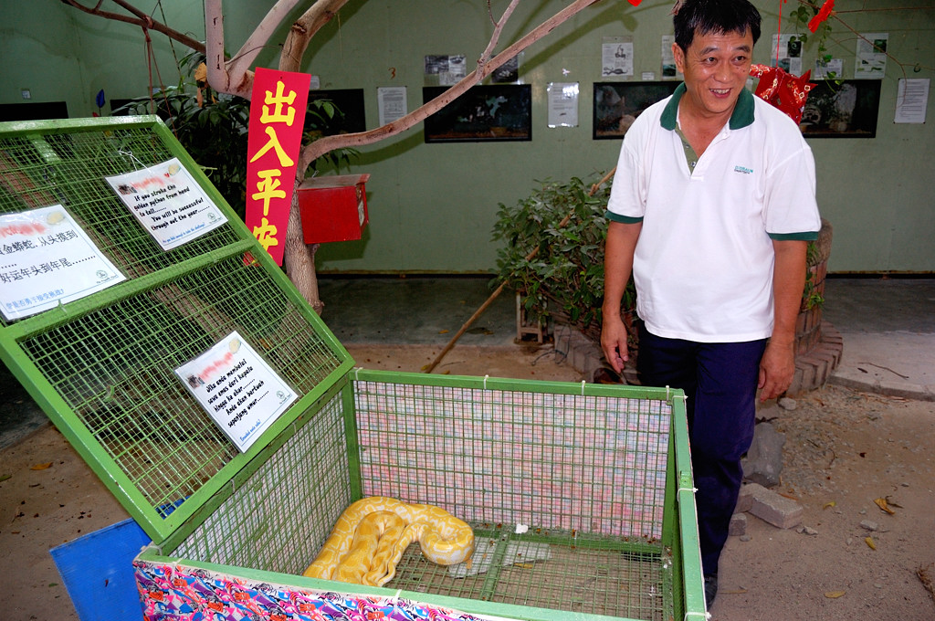 Змеиный храм. Сотрудники террариума демонстрируют удавов