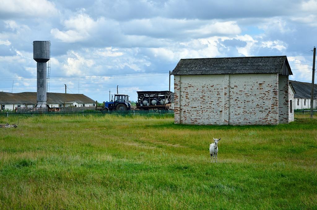 Едем по сельской местности. Тут все работает - коровники функционируют, трактора ездят, козочки пасуЦЦа