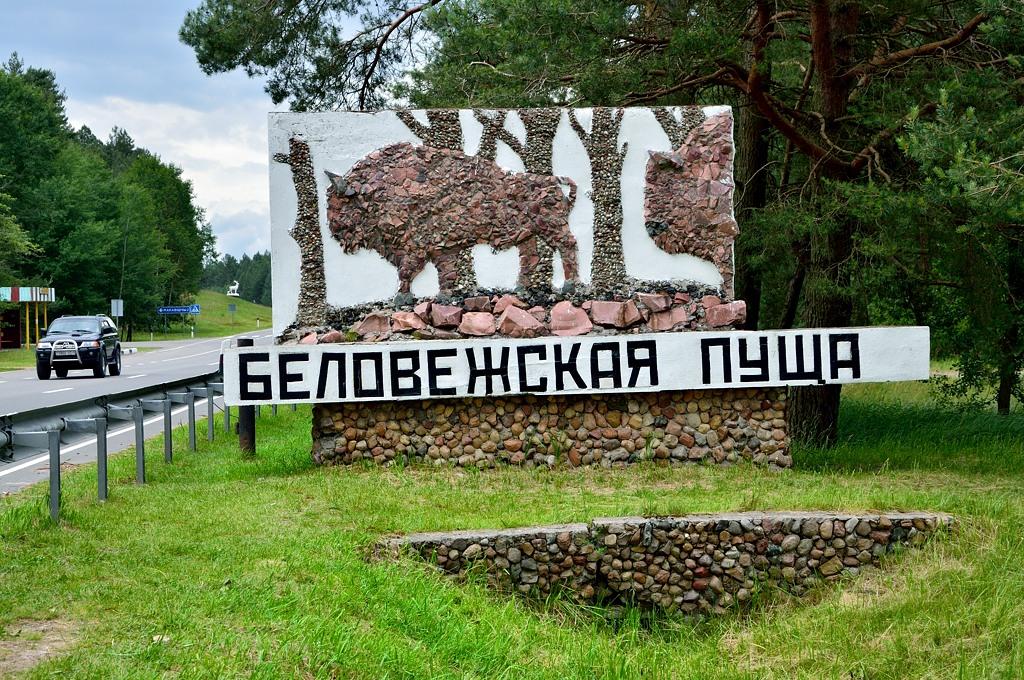 А вечером приехали в Беловежскую пущу