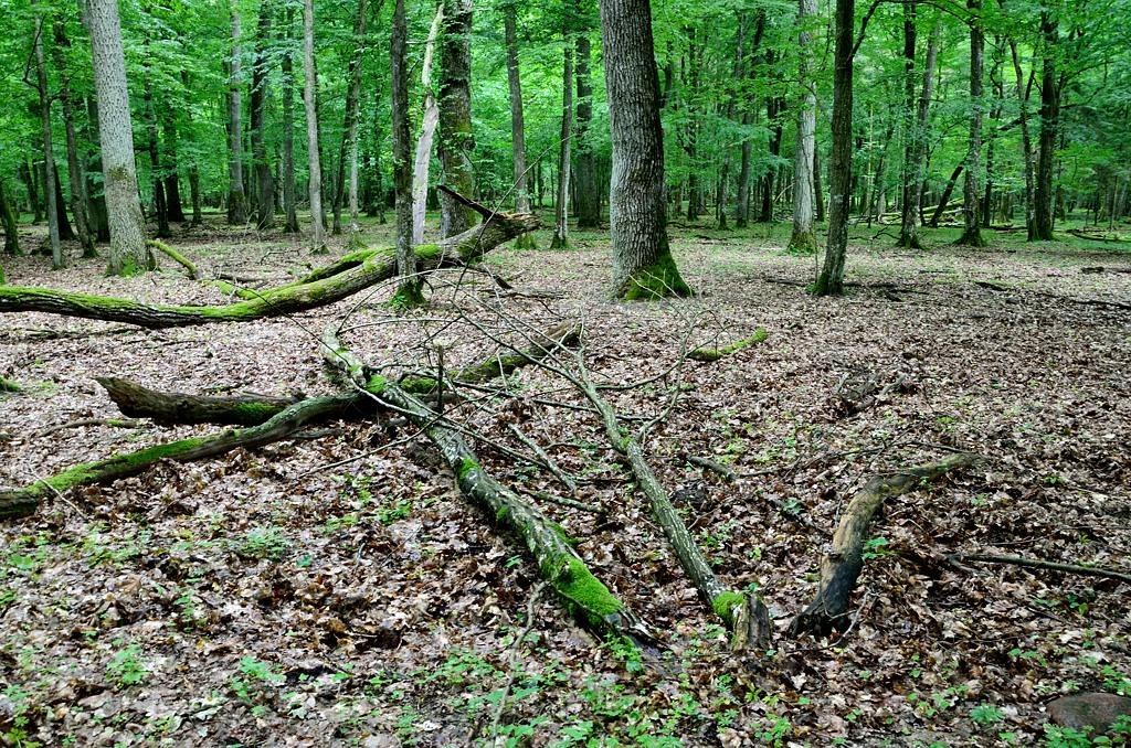 В лесу. Ну, таких видов и у нас в Усть-Нарве полно
