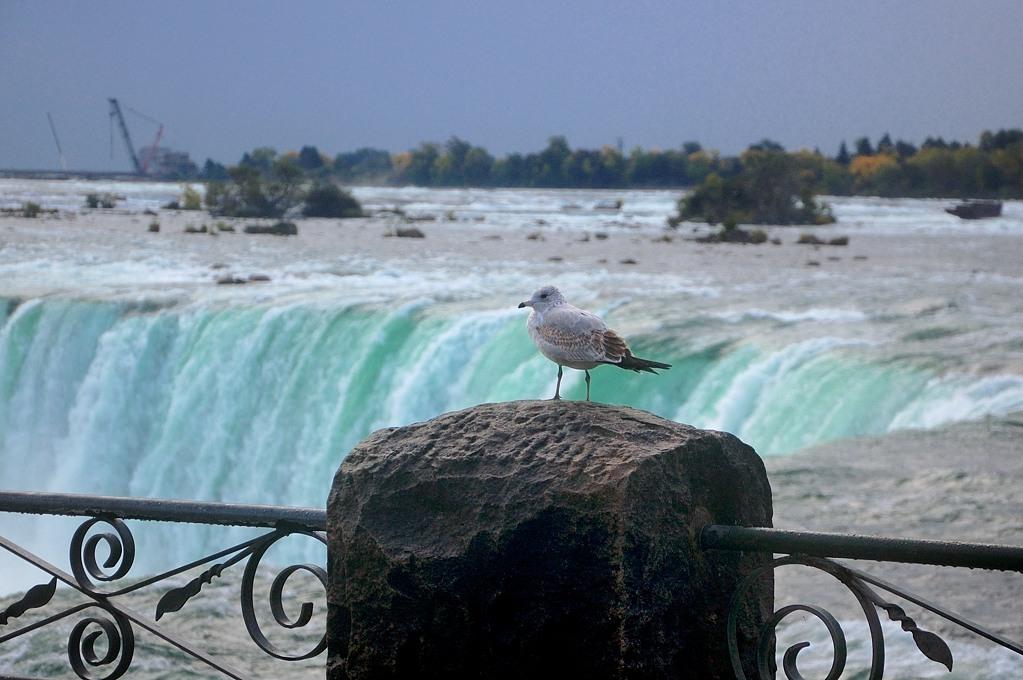 Чайка у водопада
