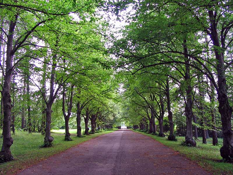 В парке Тойла-Ору. Эстония.
