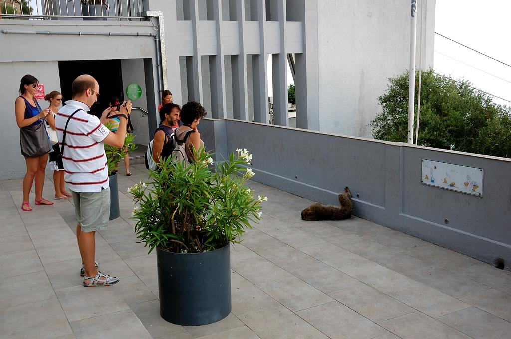 Туристы фотографируют обезьян
