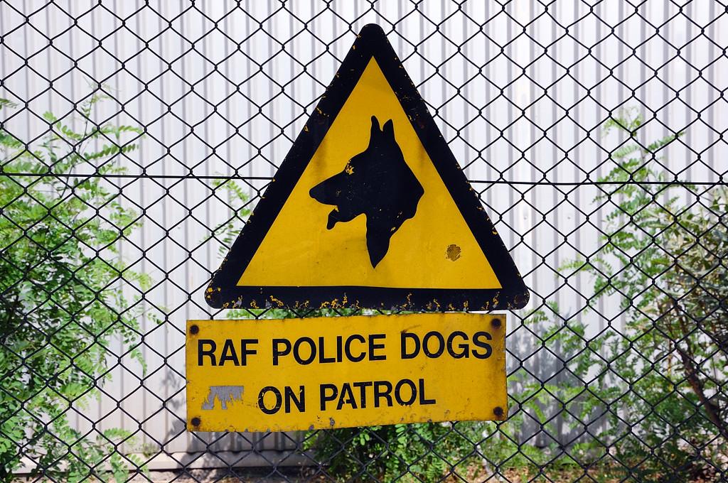 Осторожно, королевские военно-воздушные собаки!