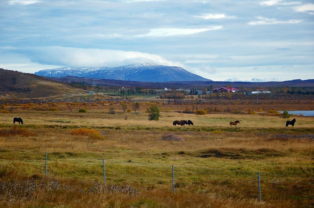 Сельский пейзаж с лошадями
