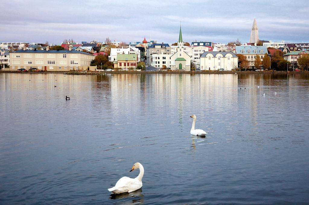 На озере Tjörnin