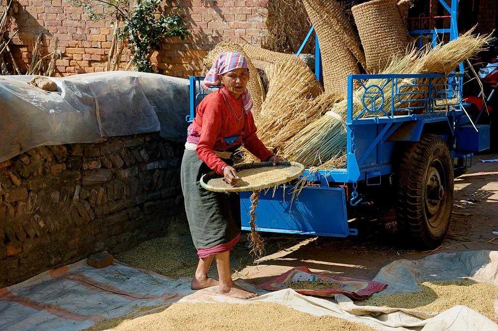 Бабушка с зерном