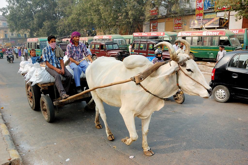Каких только транспортных средств не увидишь в Индии