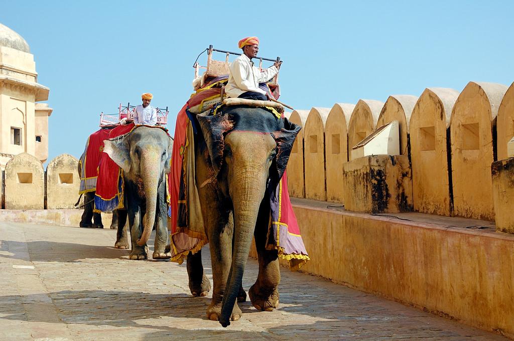 Слоны у Форта Амер