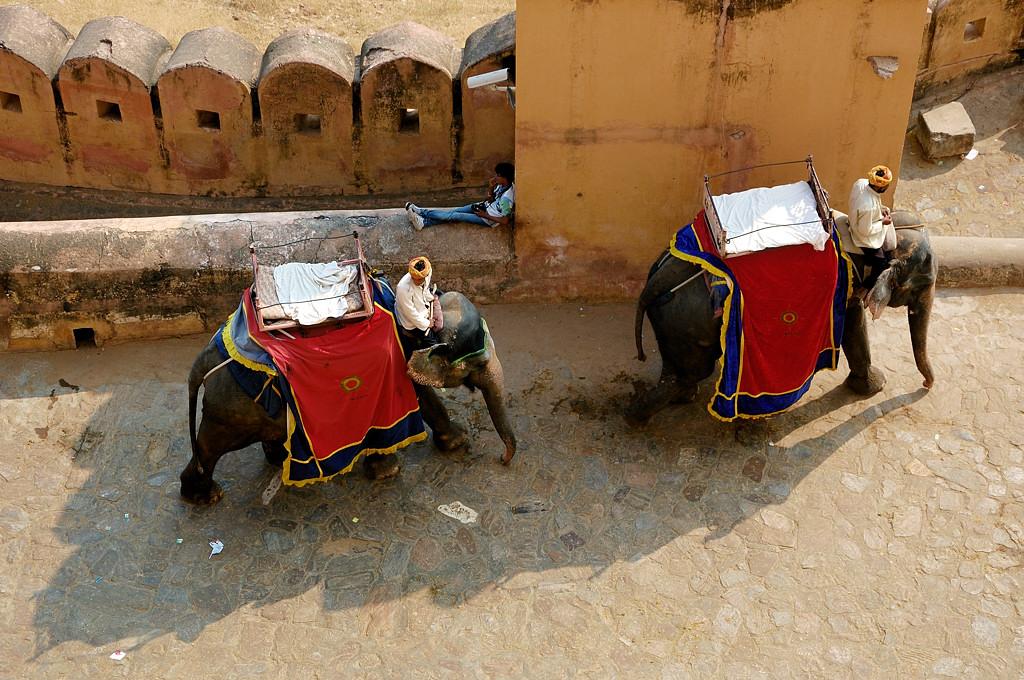 Слоны поднимаются к Форту Амер