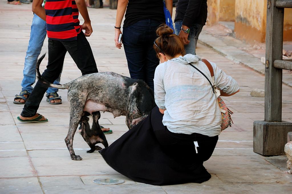 Щенщина сжалилась над щенком и отвлекает маму :)