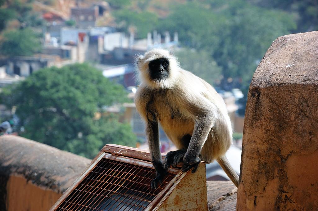 Местные обезьяны-ниггаз :)