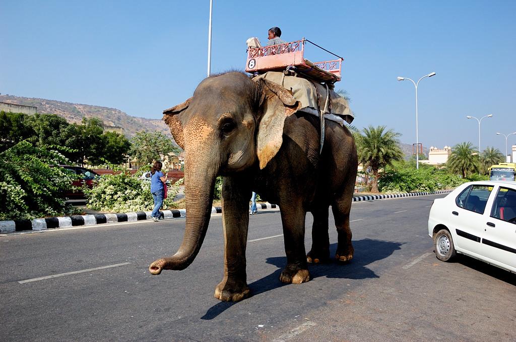Слон на шоссе. Эффектно смотрится