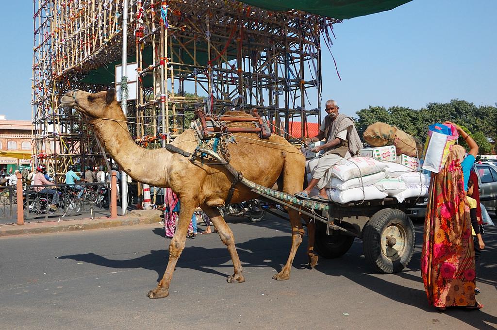 Иногда возят и на верблюдах. Все же пустыня рядом