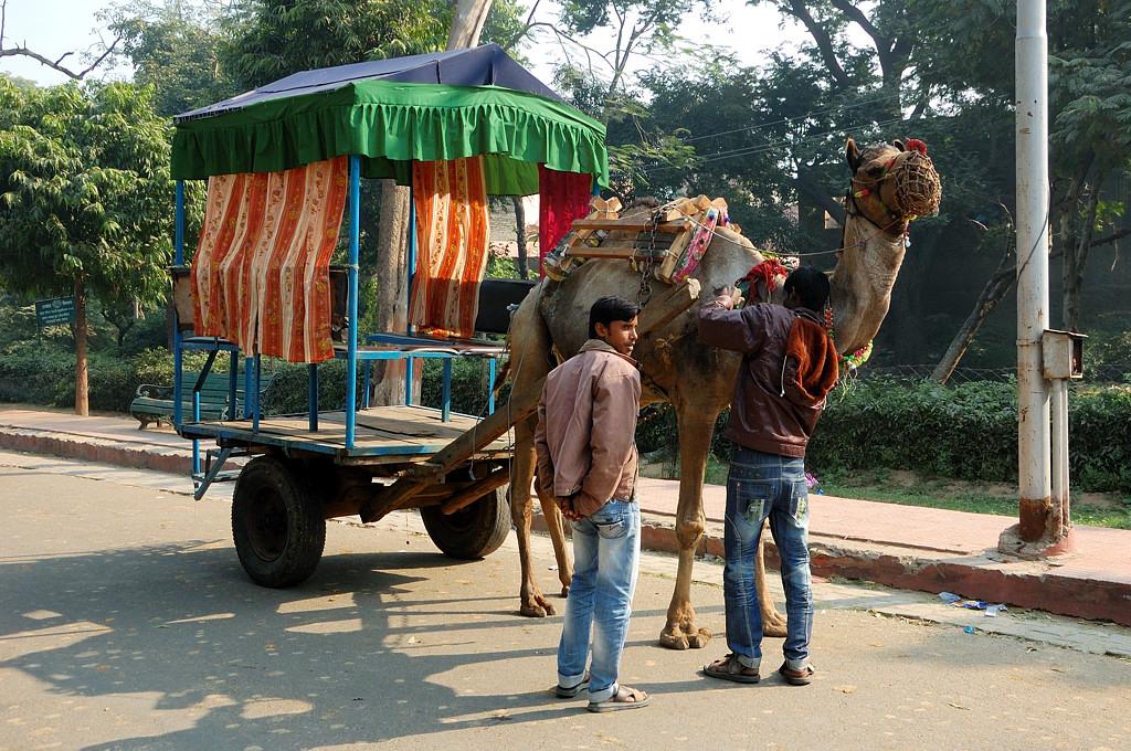 Идем к Тадж-Махалу. Появляются верблюды