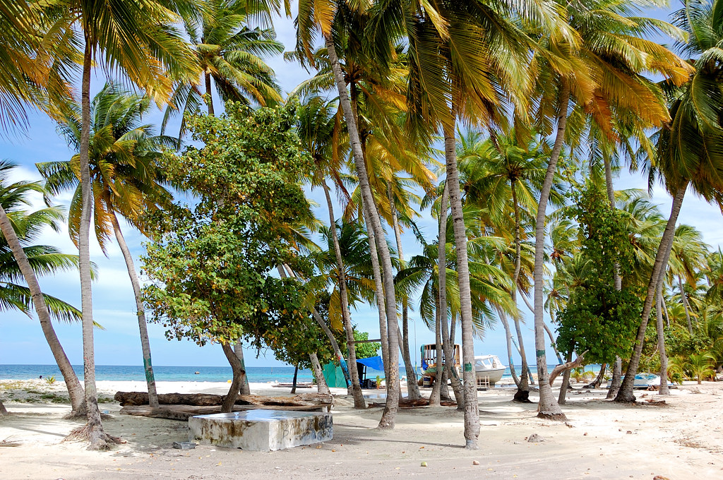 Пальмы на Маафуши