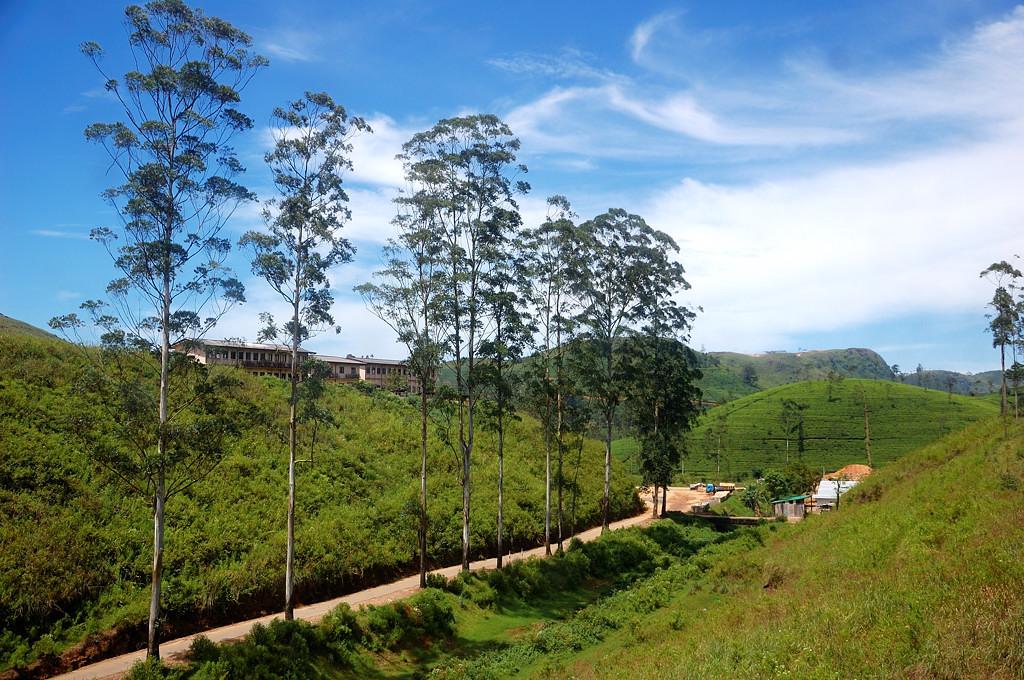 Пошли холмы с чайными плантациями