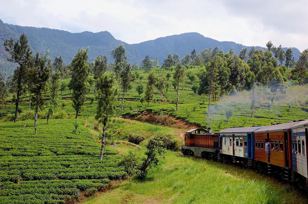 Едем по чайным плантациям