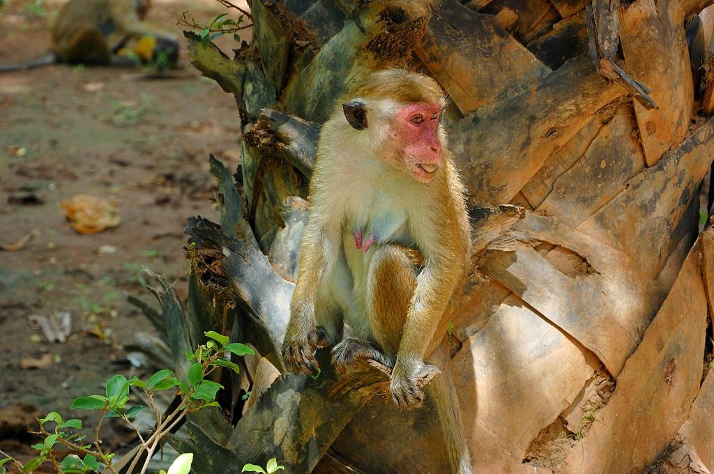 Самка обезьяны