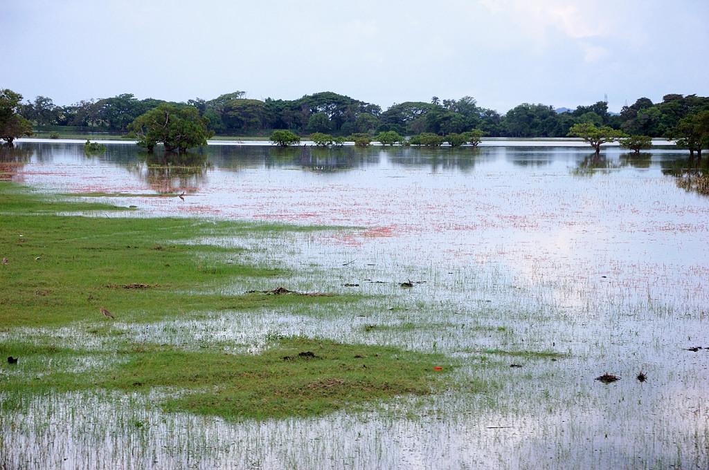Ланкийские водоемы ...