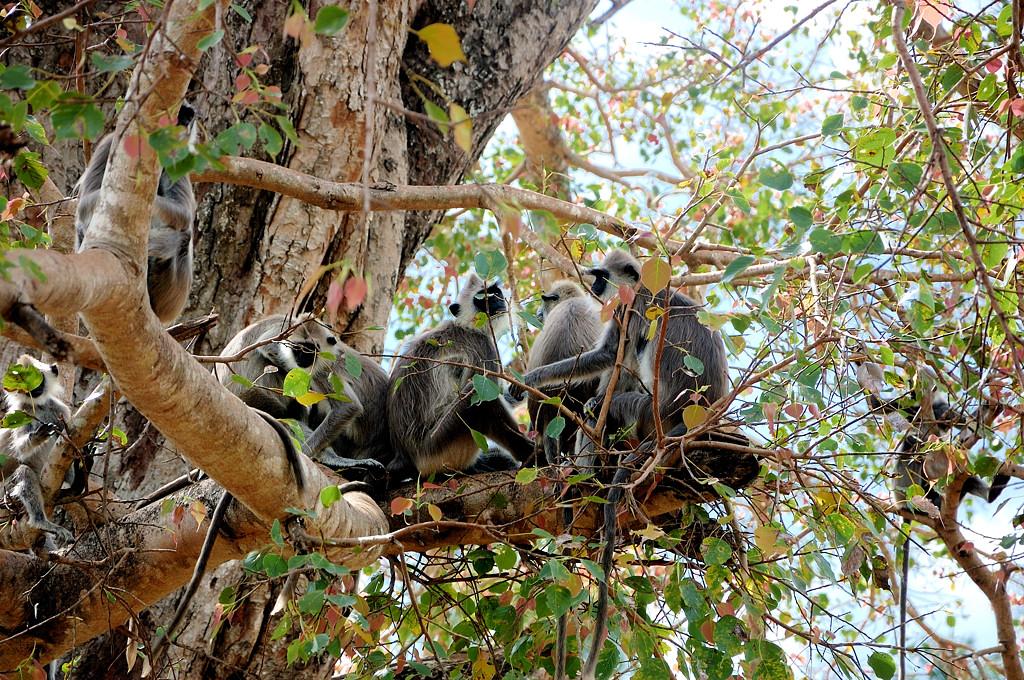 Тут обезьяны другого вида - ниггаз :)