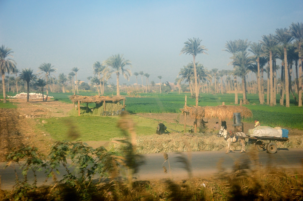 Каирские пригороды
