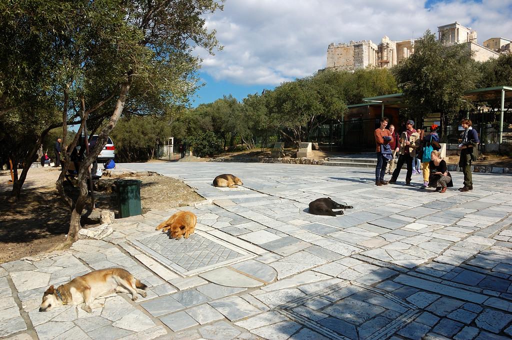 У Акрополя полно бездомных собак. Как в Сантьяго.