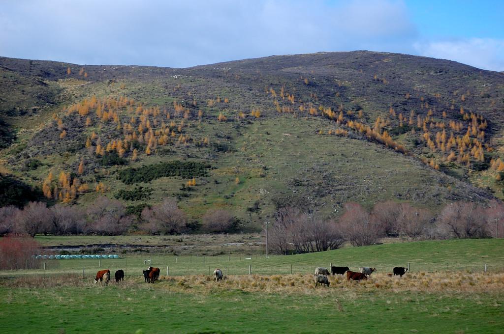 Сельский пейзаж Южного острова