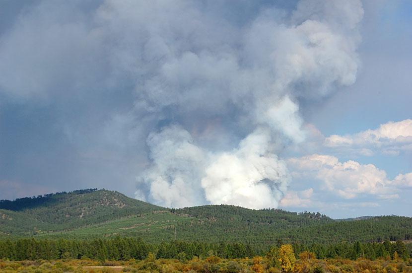 Лесной пожар в Читинской области