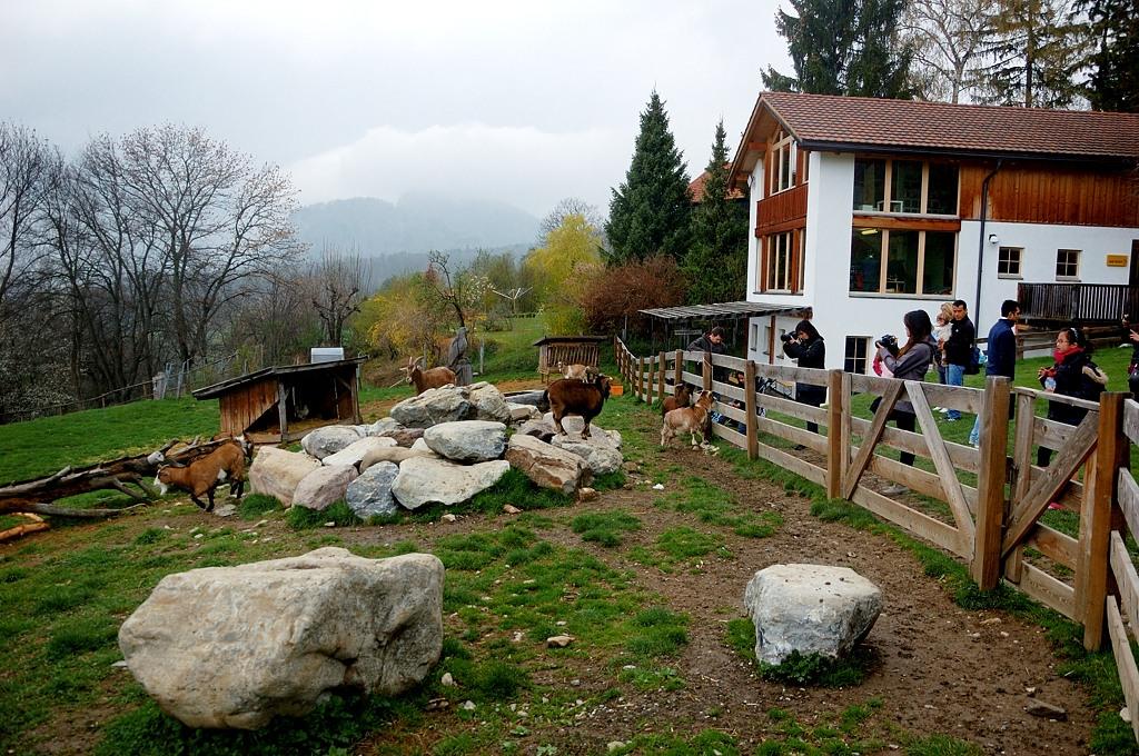 Здесь туристам демонстрируют всяких козлов